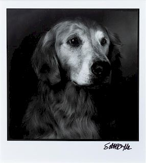 * Two Photographs of Golden Retrievers Larger: 9 3/4 x 7 7/8 inches.