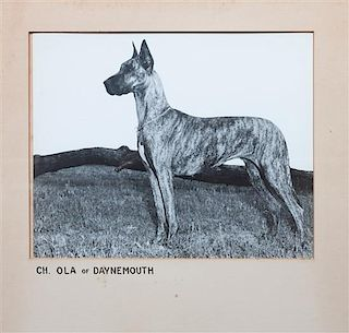 * A Group of Fourteen Great Dane Photographs Largest: 10 1/4 x 12 3/4 inches.