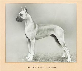 * Two Prints depicting Great Danes Larger: 7 3/4 x 9 1/4 inches.