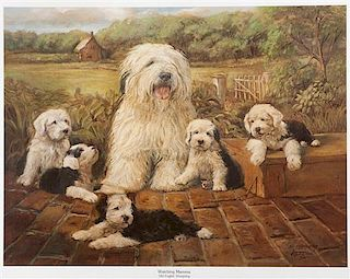 * A Print depicting Old English Sheepdogs 16 3/4 x 21 inches.