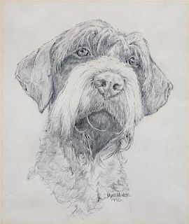 * A Head Study of a Wirehaired Pointing Griffon 9 1/2 x 8 inches.