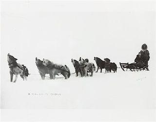* Eight Photographs of Alaskan Dog Sledding Each: 11 x 14 inches.
