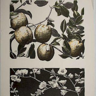 María Sada. Frutas. Litografía, 141/150, Firmada y con monograma en plancha. Sin enmarcar. 56 x 43 cm
