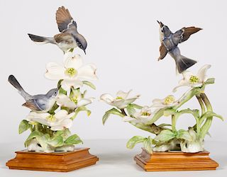 Two Dorothy Doughty, Blue-Grey Gnatcatcher Birds