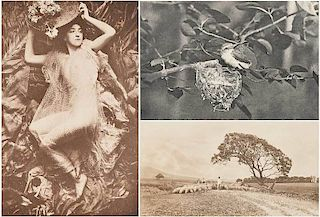 three photogravures from Camera Notes