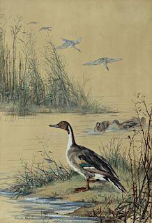 Maud Earl (1864-1943) Pintails