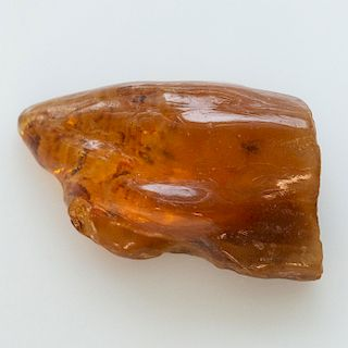 POLISHED COGNAC COPAL AMBER WITH INCLUDED INSECTS