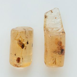 2 POLISHED LIGHT HONEY COPAL AMBER RODS W. MANY INSECTS