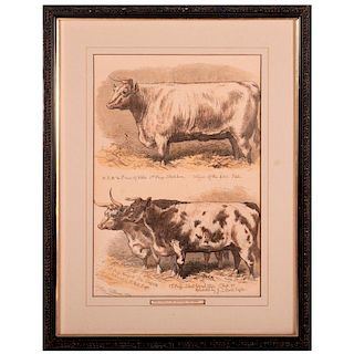 Colored print of awarded cattle at a show signed Sheldon Williams and dated 1876.