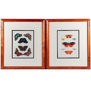 A pair of 19th century prints of butterflies.