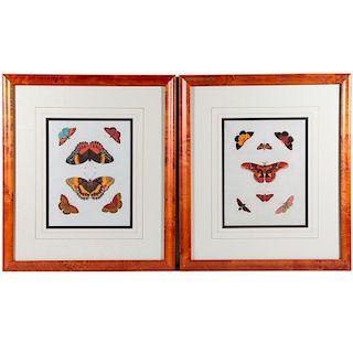 A pair of 19th century colored prints of butterflies.