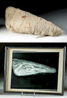 Egypt Mummified Ibis + Xray Photo, ex-MacMurray College