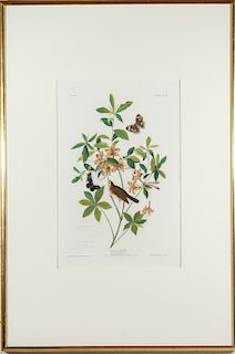 Audubon Swainson's Warbler Hand-Colored Engraving