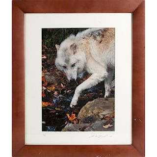COLOR PHOTOGRAPH, WHITE WOLF