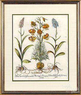 Four engraved botanical plates