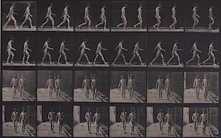 Eadweard Muybridge - Animal Locomotion: Plate 12
