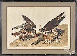 John James Audubon engraving and aquatint