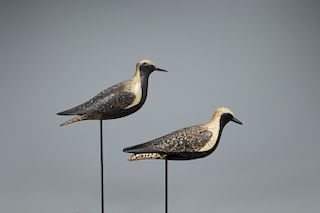 Hollow Golden Plover Pair