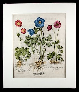 1st Edition Besler Hand Colored Engraving - 1613