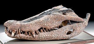 Early 20th C. Iatmul Overmodeled Crocodile Skull, Shell