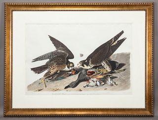 "After John James Audubon ""Great-Footed Hawk"""