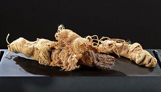 Rare Egyptian Mummified Baby Crocodile Bundle w/ X-Ray