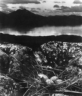 Bill Brandt (1904-1983)  - Gull's Nest, Late on Midsummer Night, Isle of Skye, 1947