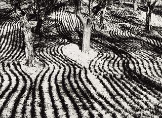 MARIO GIACOMELLI (1925–2000) 'Presa di coscienza sulla natura' (On being aware of nature), 1960