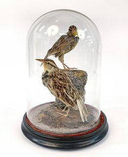 VICTORIAN TAXIDERMY BIRD GLASS DOME DISPLAY