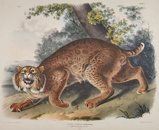 After JOHN JAMES AUDUBON, (American, 1785-1851), Common American Wild Cat. Lynx Rufus (Plate I), hand-colored lithograph, sight: 20 x 24 in., farme: 3