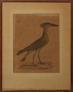 "William M. Hart (1830-1908), ""Scopus Umbretta,"" 19th c., bird engraving, marked Ord. IV, Grallae, No 110, titled lower center, signe..."