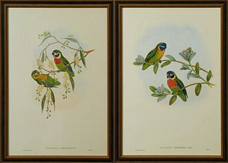 "John Gould & H.C. Ritcher, ""Cyclopsitta Suavissima,"" and ""Cyclopsitta Melarogenys,"" 20th c., pair of parrakeet prints, presented in..."