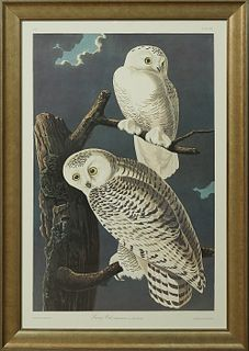 "John James Audubon (1785-1851), ""Snowy Owl,"" No. 25, Plate 121, Amsterdam edition, presented in a gilt and ebonized frame, zH.- 39 i..."
