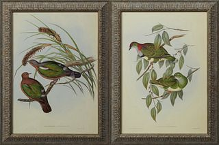 "John Gould & H.C. Ritcher, ""Chalcophaps Chrysocholra,"" and ""Ptlinopus Superbaus,"" early 20th c., pair of dove prints, presented in p..."