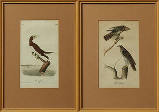 "John James Audubon (1785-1851), ""Gos Hawk"" No 5, Plate 23, and ""Booby Gannet,"" no 86, Plate 426, 19th c., pair of Octavo prints, in..."
