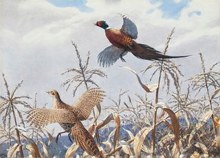 Aiden Lassell Ripley (1896-1969) A Pair of Pheasants