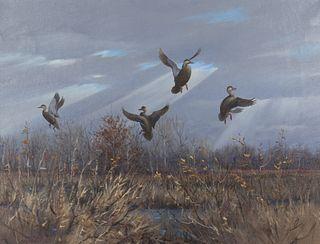 Owen J. Gromme (1896-1991)  Rising Black Ducks