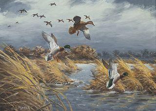 David A. Maass (b. 1929)  Mallards in the Wind