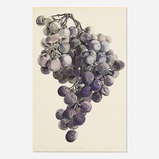 Don Nice, Minneapolis Grapes (Study)