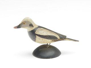 Miniature oldsquaw, Elmer Crowell, East Harwich, Massachusetts.