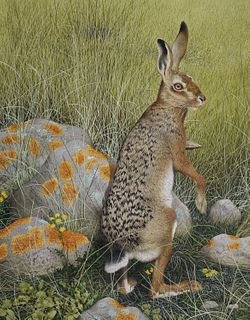 """Ken Lilly (1929 - 1996) """"Hare"""""""