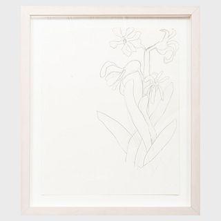 Jack Pierson (b. 1960): Untitled (Flower)