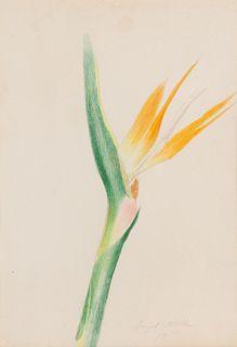 Joseph Stella (American, 1877-1946) Bird of Paradise, 1911