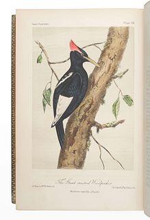 CASSIN, John (1813-1869). Illustrations of the Birds of California, Texas, Oregon, British and Russian America.Philadelphia: J.B. Lippincott & Co., 1
