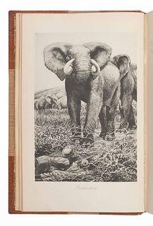 CHAPMAN, Abel (1851-1929). On Safari. London: Edward Arnold, 1908.