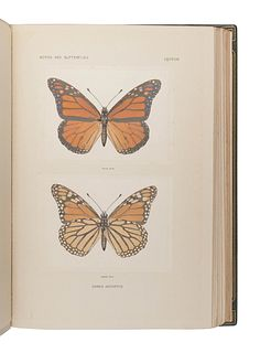 DENTON, Sherman Foote (1856-1937). As Nature Shows Them: Moths and Butterflies East of the Rocky Mountains. Boston: Bardlee Whidden, 1900.