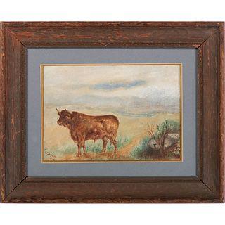 An American Portrait of a Bull