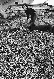 Luciano D'Alessandro (1933-2016)  - Pesce azzurro. Porto Garibaldi, Ferrara, 1973