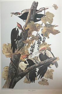 Audubon Pileated Woodpecker by M. Bernard Loates
