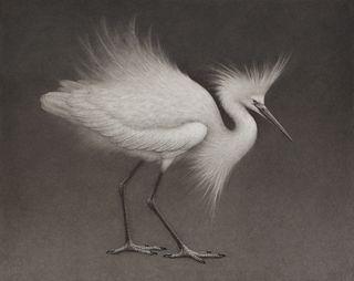 Lee Andre, Snowy Egret II